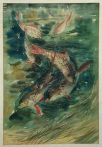 Höings , Friedrich KS 307 1908 Lippstadt - 1978 Fische Grafik, Aquarell 1936 47x32 68x53 sieben Fische in Gewässer von oben, Darst.47x32cm Tier